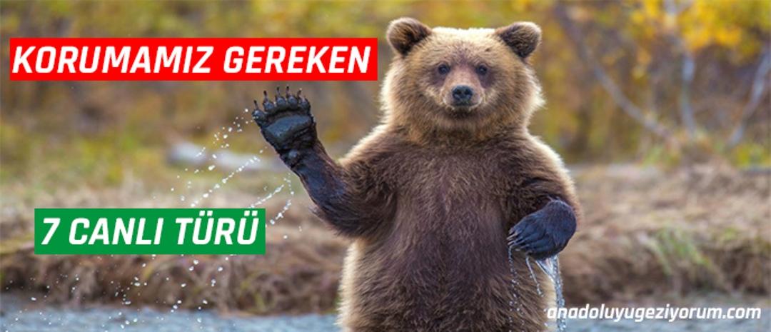 Türkiye'de Korunması Gereken 7 Canlı Türü