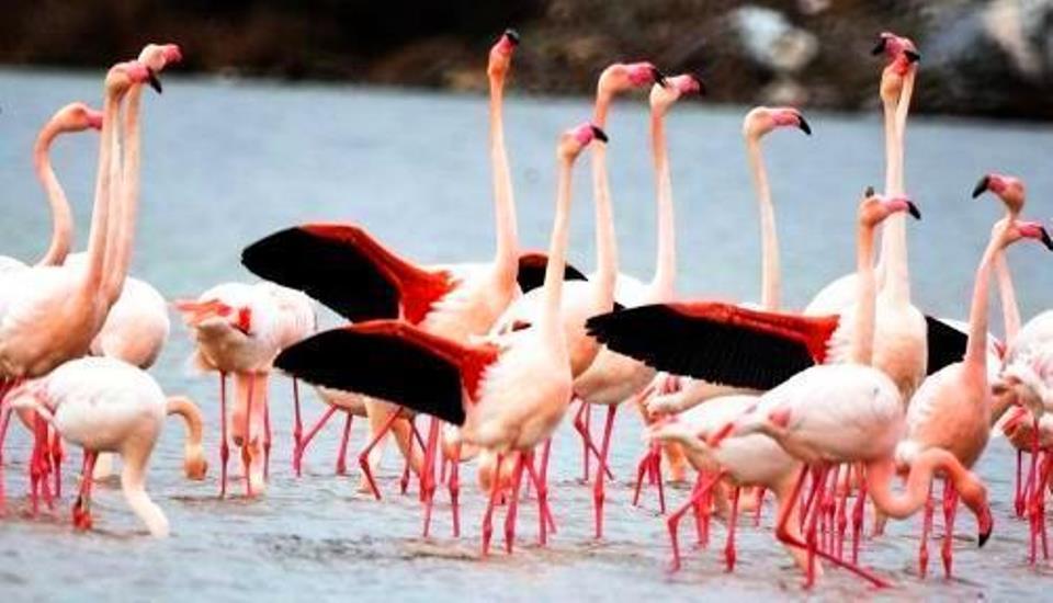 Türkiye'deki  Kuş Cennetleri